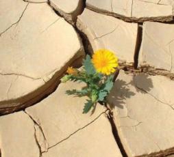 Coltivare la speranza