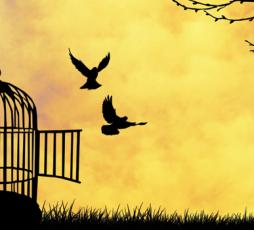 Voglio essere libero